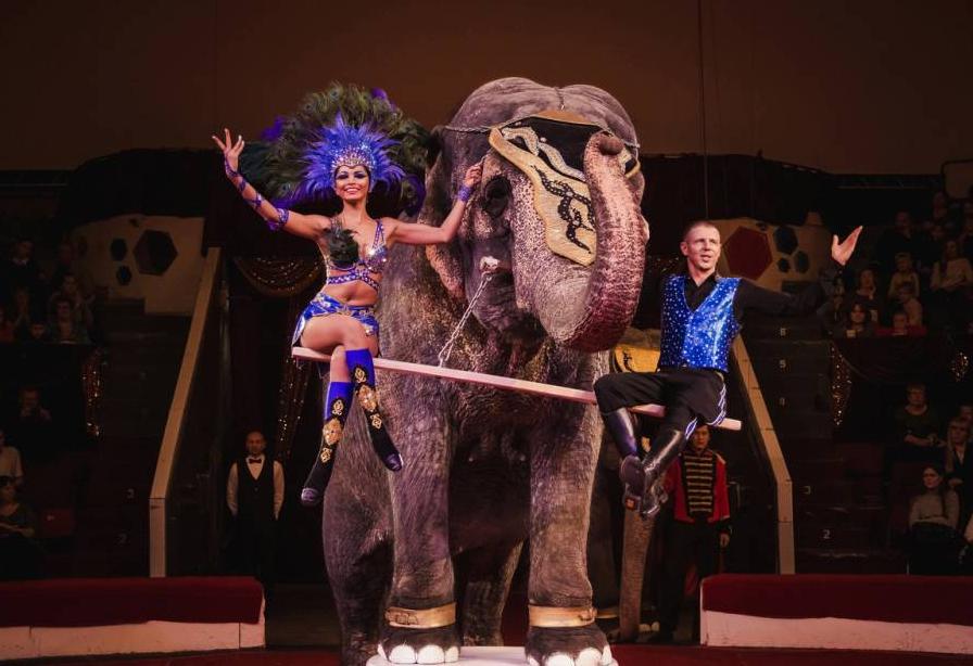 Купить билет онлайн в цирке волгоград кино мурманске афиша